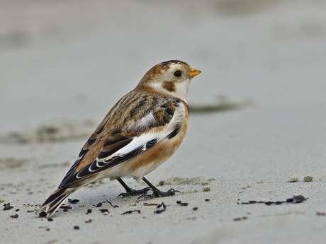 Exposition photo - Les oiseaux de la Baie