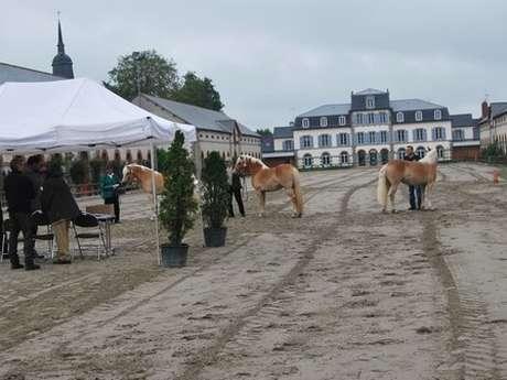 Qualification chevaux de sports et de loisirs
