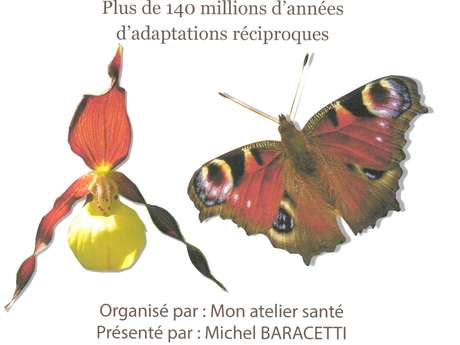 Conférence : la fabuleuse histoire des fleurs et des insectes pollinisateurs.