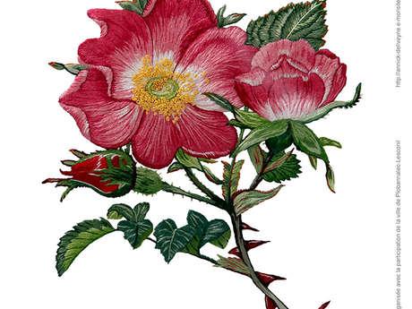 Exposition peinture à l'aiguille - Annick Deliveyne