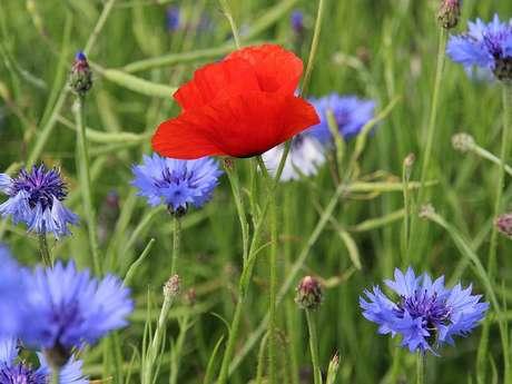 Fleurs coupées - La Pépinière des Caps - Horticulture