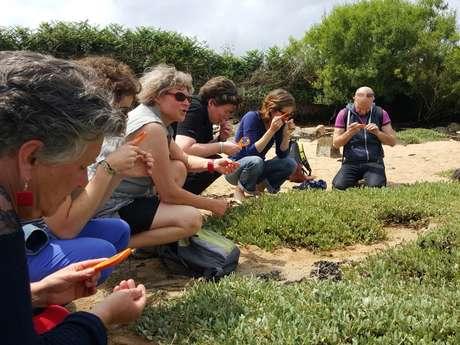 Plantes littorales, aromatiques et médicinales