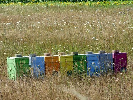 Rencontre - Sven Hélias auteur apiculteur