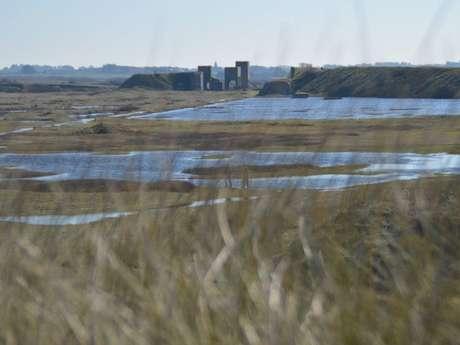 Balade nature - Rand'eau née des dunes