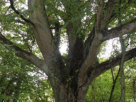 Atelier nature - Ressourcez-vous aves l'énergie des arbres