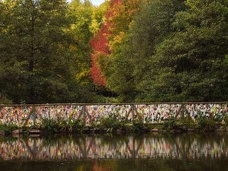 Balade végétale d'automne