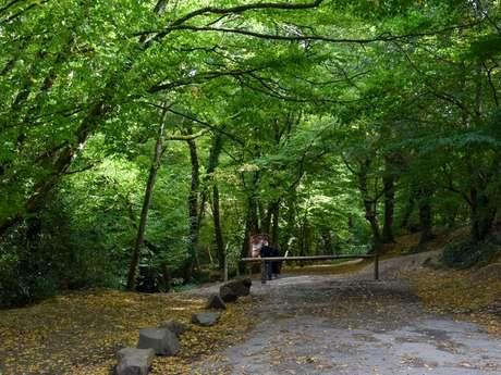 Forêt de Paimpont en Brocéliande
