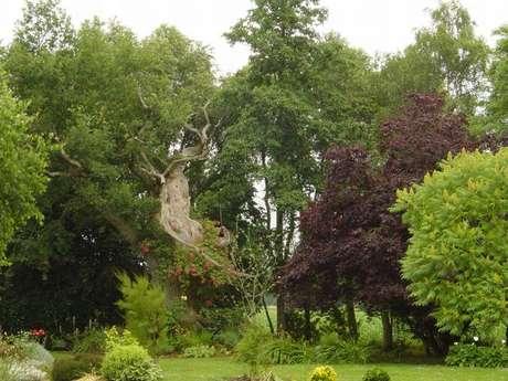 Le chêne de Brocéliande