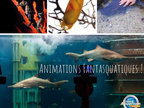 Animations gratuites au Grand Aquarium