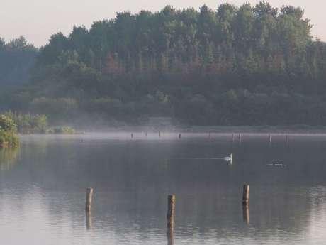 Visite animée - Découverte des oiseaux d'eau de l'étang de Careil