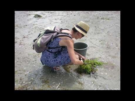 Sortie nature à la découverte des algues alimentaires