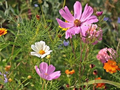 Balade découverte de plantes sauvages et dégustation de fleurs