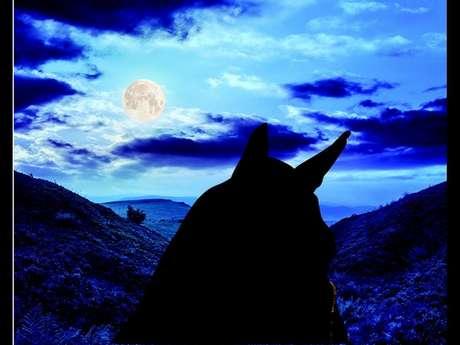 Balade à cheval  sous la lune
