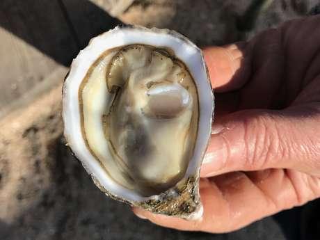 Ferme marine paimpolaise - Maison Arin
