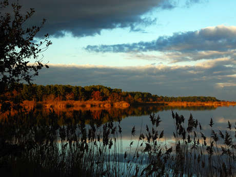 Visite de la réserve naturelle de l'étang de Cousseau