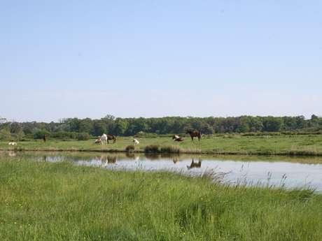 Marais du Logit
