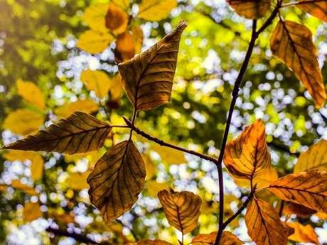 L'automne en fête au Moulleau