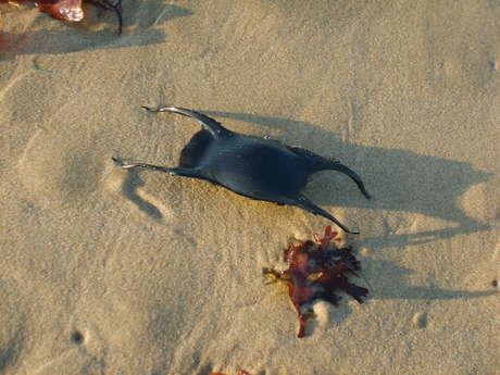 Découverte de la dune Saint Nicolas au Verdon-sur-Mer