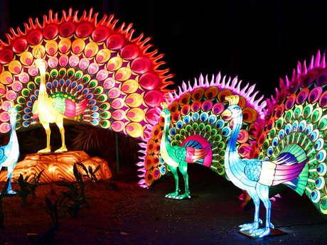 En Route pour le Festival des Lanternes à Gaillac !