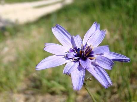 Balade : La Flore de la Petite Vallée du Ruisseau de Clédelles