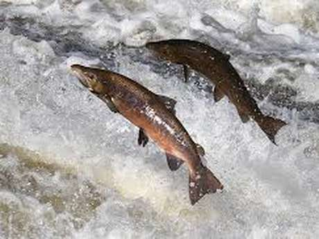 Armurerie - Chasse - Pêche Nouzières Denis