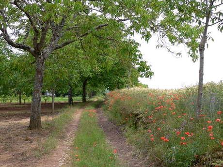Chemin de l'Ancienne Voie Romaine