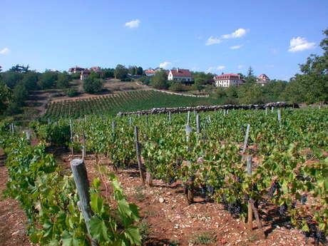 Dans les Vignes de Glanes