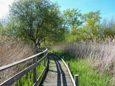 Circuit d'Interprétation de la Réserve Naturelle Régionale du Marais de Bonnefont