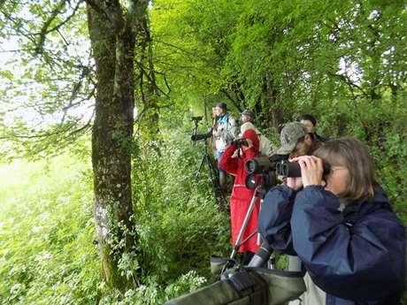 Balade Découverte des Oiseaux sur les Bords de la Dordogne
