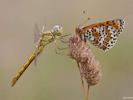 Libellules et Papillons… une Histoire d'Ailes