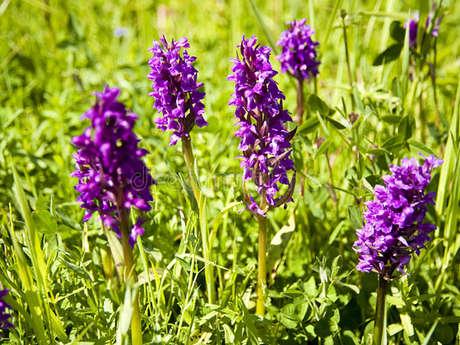 """Randonnée """"Orchidées Sauvages"""""""