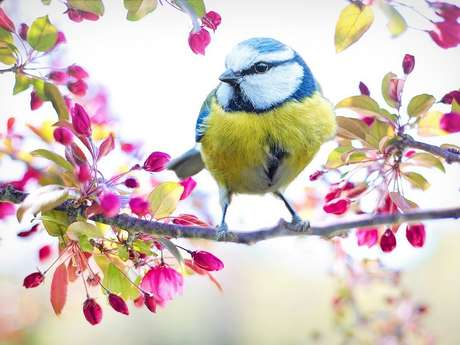 Conférence : Les Oiseaux du Lot