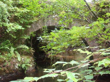 De Pontverny au Sentier Botanique