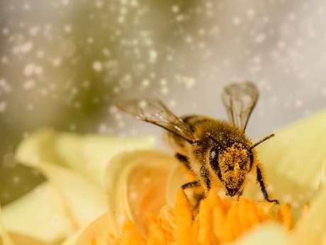 Les abeilles, nos amis de toujours