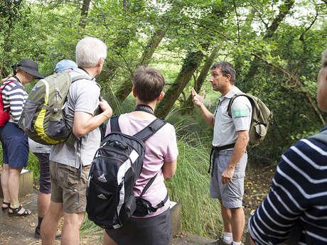 Visite guidée découverte de la réserve naturelle du courant d'Huchet