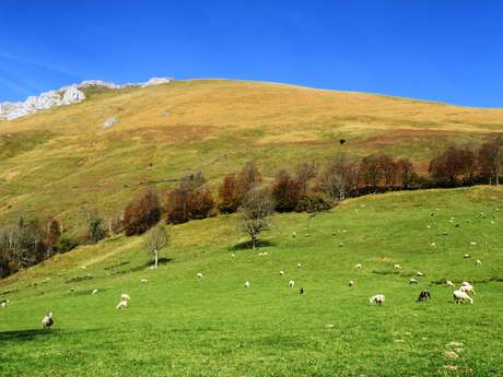N° 7 Aspe - Col de Laünde