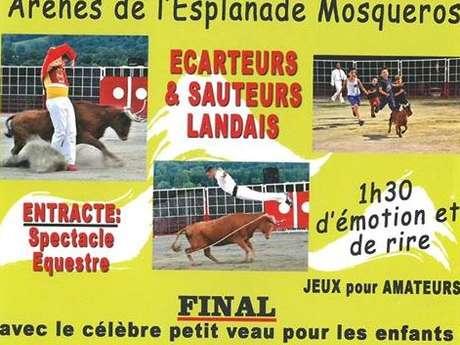 Spectacle de vachettes - Course Landaise
