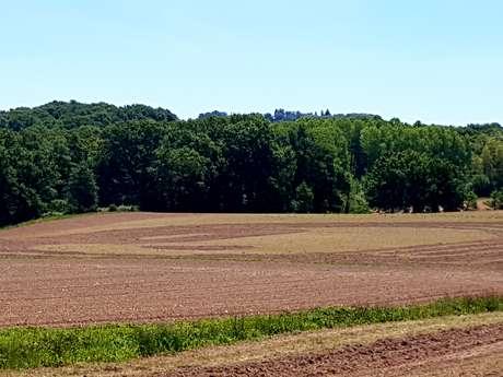 Le labyrinthe de Chalosse