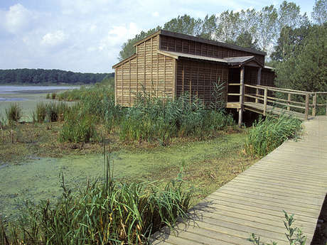 Observatoire ornithologique de l'Etang du Grand Coulon - Sud