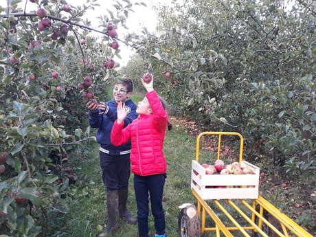 De la cueillette de pommes à l'art culinaire avec un chef !
