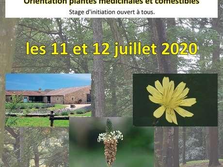 STAGE DE BOTANIQUE AU COEUR DU MASSIF FORESTIER DE MERVENT VOUVANT