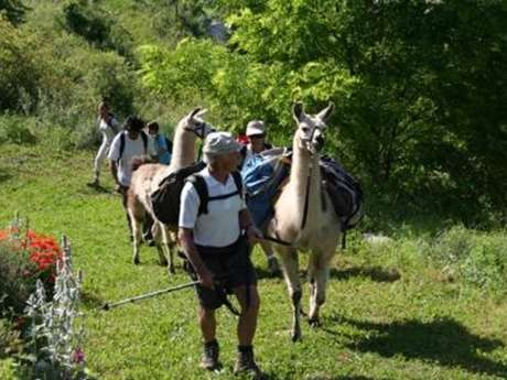 Promenade avec des lamas - La ferme des lamas