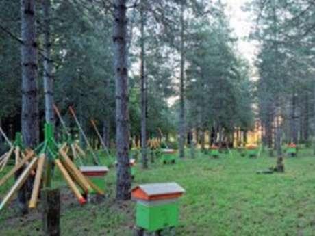Le Bois de Montrosiès