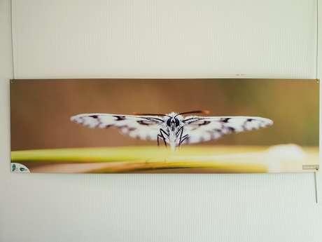 « Minuscules en majuscules », photographies d'insectes de Brière
