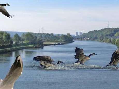 Balade - Les oiseaux du bord de Meuse