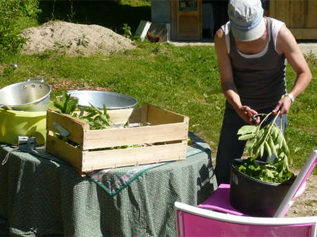 Petits Jardiniers cultures de plantes médicinales