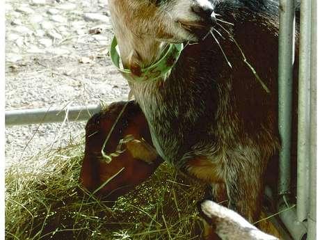 Vente de fromages et viande à la chèvrerie de Chartreuse