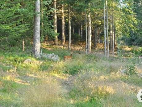 """Les Rendez-vous de mon Parc """"Balade en forêt"""""""