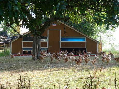 Vente de volailles élevées en plein air à la ferme de la Renounière