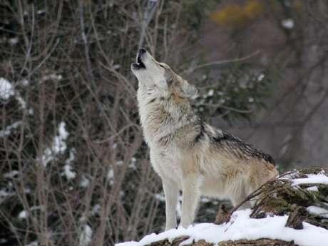 """""""Sur les traces du Loup en Belledonne"""" 2 jours"""